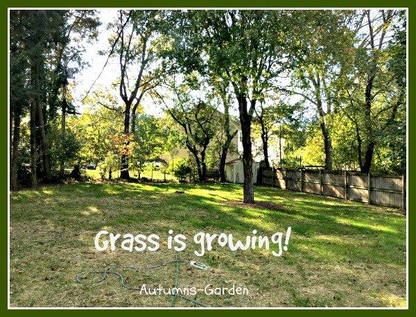 new grass